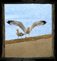 L'isola dei gabbiani (Mattia Camellini) Tags: isoletremiti gargano puglia seagull gabbiani uccelli birds nature mare sea isle italia italy mattiacamellini canoneos7d canonefs18135mmf3556is finestra window