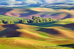 Golden Palouse (Gary Grossman) Tags: palouse northwest washington landscape wheat lentils crops hills shadows fields agriculture farmland spring may colorful garygrossman garygrossmanphotography steptoebutte landscapephotography shotsofawe pacificnorthwest