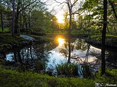 190604-93 Domaine Joly (clamato39) Tags: domainejoly lotbinière provincedequébec québec canada olympus marais étang eau water sunset sun soleil nature outside paysage