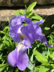 """""""Lord, let me wake every morning and be thankful for the wonderful life you have given me."""" (Trinimusic2008 -blessings) Tags: trinimusic2008 judymeikle nature flowers spring june 2019 toronto to ontario canada gratitude life happiness health friendships love thanks wethenorth wethenorthday"""