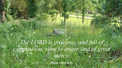 The LORD is Gracious (Laveda D. Rockford) Tags: standingontherock encourgeothers salvation graciousness compassion merciful jesuschrist