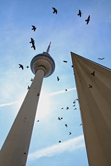 Fernsehturm & Alexanderplatz Vs The Birds (adamsgc1) Tags: fernsehturm alexanderplatz birds tower flock berlin germany