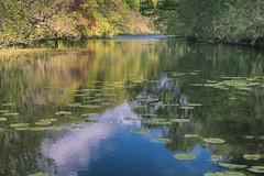 Lochan at Aros Park (warth man) Tags: d750 nikon70300mmafp lochan tobermory mull hebrides scotland majesticlinecruise