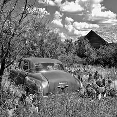 IMG_5562Millersview, TX. Dodge Meadowbrook & homestead. (mattybravo) Tags: abandoned abandonedhomestead abandonedhouse cactus car dodge meadowbrook millersviewtx rustic rusty