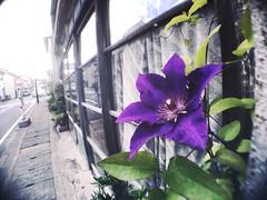 Purple wizard (U-ichiro1003) Tags: street snap iphonese hipstamatic wide lens