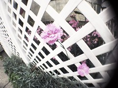 Sealed angel (U-ichiro1003) Tags: street snap iphonese hipstamatic wide lens