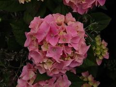 IMG_2219 (belight7) Tags: nature uk england walk park flowers