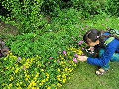 IMG_2182 (belight7) Tags: nature uk england walk park flowers