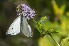 Mariposa 2 (*efejota*) Tags: insecto mariposa flor naturaleza