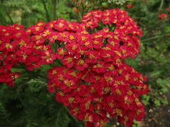 IMG_2150 (belight7) Tags: nature uk england walk park flowers