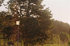 2019.06.09 Leica R5 Vario-Elmar 80-200mm f4 fresh film 04-2021 Kodak Gold ISO200 Lithuania Pervalka (20) (nefotografas) Tags: 20190609 leicar5 varioelmar80200mm f4 freshfilm 042021 kodakgold iso200 lithuania pervalka sunrise