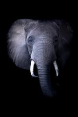 Eléphant (julien.lalanne8) Tags: safari africa uganda animal animals wild wildlife afrique ouganda portrait black light