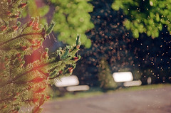 2019.06.09 Leica R5 Vario-Elmar 80-200mm f4 fresh film 04-2021 Kodak Gold ISO200 Lithuania Pervalka (14) (nefotografas) Tags: 20190609 leicar5 varioelmar80200mm f4 freshfilm 042021 kodakgold iso200 lithuania pervalka sunrise