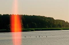 2019.06.09 Leica R5 Vario-Elmar 80-200mm f4 fresh film 04-2021 Kodak Gold ISO200 Lithuania Pervalka (13) (nefotografas) Tags: 20190609 leicar5 varioelmar80200mm f4 freshfilm 042021 kodakgold iso200 lithuania pervalka sunrise