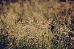 2019.06.09 Leica R5 Vario-Elmar 80-200mm f4 fresh film 04-2021 Kodak Gold ISO200 Lithuania Pervalka (26) (nefotografas) Tags: 20190609 leicar5 varioelmar80200mm f4 freshfilm 042021 kodakgold iso200 lithuania pervalka sunrise