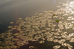 2019.06.09 Leica R5 Vario-Elmar 80-200mm f4 fresh film 04-2021 Kodak Gold ISO200 Lithuania Pervalka (21) (nefotografas) Tags: 20190609 leicar5 varioelmar80200mm f4 freshfilm 042021 kodakgold iso200 lithuania pervalka sunrise