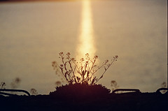 2019.06.09 Leica R5 Vario-Elmar 80-200mm f4 fresh film 04-2021 Kodak Gold ISO200 Lithuania Pervalka (3) (nefotografas) Tags: 20190609 leicar5 varioelmar80200mm f4 freshfilm 042021 kodakgold iso200 lithuania pervalka sunrise