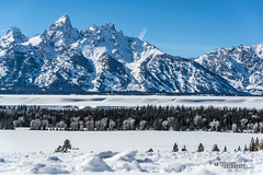 Yellowstone National Park Winter 2019 166 (White Shadow 56) Tags: buffalo bison wyoming jackson hole teton mountains yellowstone elk eagles skiing snow trees western snowcats horses sleigh old faithful streams waterfalls hot springs winter national park herds range buttes nikon d600 tamron 28300mm sigma 50500mm tokina 1737