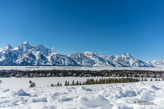 Yellowstone National Park Winter 2019 169 (White Shadow 56) Tags: buffalo bison wyoming jackson hole teton mountains yellowstone elk eagles skiing snow trees western snowcats horses sleigh old faithful streams waterfalls hot springs winter national park herds range buttes nikon d600 tamron 28300mm sigma 50500mm tokina 1737