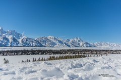 Yellowstone National Park Winter 2019 170 (White Shadow 56) Tags: buffalo bison wyoming jackson hole teton mountains yellowstone elk eagles skiing snow trees western snowcats horses sleigh old faithful streams waterfalls hot springs winter national park herds range buttes nikon d600 tamron 28300mm sigma 50500mm tokina 1737