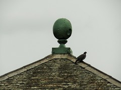 IMG_2156 (belight7) Tags: roof old pigeon nature uk england park walk