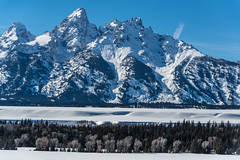 Yellowstone National Park Winter 2019 168 (White Shadow 56) Tags: buffalo bison wyoming jackson hole teton mountains yellowstone elk eagles skiing snow trees western snowcats horses sleigh old faithful streams waterfalls hot springs winter national park herds range buttes nikon d600 tamron 28300mm sigma 50500mm tokina 1737
