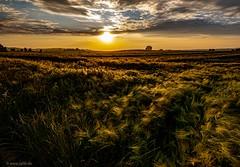 Sonne über dem Feld (carsten.plagge) Tags: 2019 cp55 carstenplagge feld gegenlicht lumix lumixworld sonne wolken