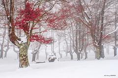 Edurtza ederra Egiriñaon (Jabi Artaraz) Tags: egiriñao gorbea invierno nieve elurra pagoak hayas