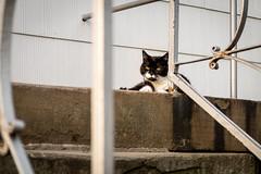Beim Chillen gestört (Sylsine) Tags: deutschland architektur katze innenstadt haustiere geländer abendlicht tiere treppe stadt städte sauerland menden