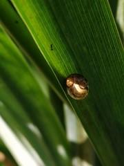 Little snail (msergeevna) Tags: little snail nature naturephoto luontokuvaus luonto etana улитка природа природафото honor10i green