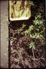 (CaseyLynette) Tags: img591edit analog analogue film lifestyle life living caseyhayes