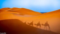 The Camel Caravan is moving towards sunset (patuffel) Tags: marokko morocco sahara sand camel caravan karawane berber erg chebbi dunes dune dromedary merzouga leica m10 28mm summicron red