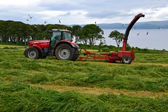 (Zak355) Tags: rothesay isleofbute bute scotland scottish silage farm farming tractors masseyferguson tractor