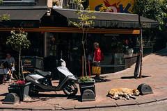 DSCF8296 (KirillSokolov) Tags: yellow istanbul turkey 2019 travel trip fujifilm fujifilmxt2 xtrance mirrorless kirillsokolov стамбул турция фуджи беззеркалка