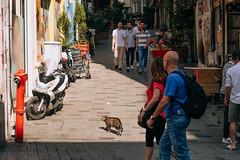 DSCF8274 (KirillSokolov) Tags: yellow istanbul turkey 2019 travel trip fujifilm fujifilmxt2 xtrance mirrorless kirillsokolov стамбул турция фуджи беззеркалка