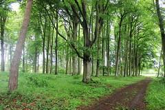1978 AU COEUR DE LA FORET (rustinejean) Tags: forest foret rustine coeur nature chemin