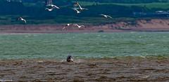Few off Flippers Mates off Aberdeen Coast.