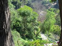 Trees Inside Japanese Friendship Garden in San Diego