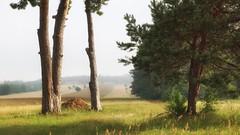*** (pszcz9) Tags: polska poland przyroda nature natura naturaleza pejzaż landscape drzewo tree lato summer roztocze beautifulearth sony a77