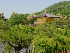 Kinkaku-ji (Luis Pérez Contreras) Tags: viaje japón japan trip 2019 olympus m43 mzuiko omd em1x wanderlust travel kioto kyoto kinkakuji 金閣寺 rokuonji 鹿苑寺