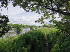 Walking along the river bank on a summer's morning in Preston (janettehall532) Tags: riverribble river riverbank water prestonlancashire preston lancashire uk beautiful beauty northwestengland england day summersmorning summer naturephotography nature naturelovers landscapephotography landscape grass sun blueskies blue outdoors outdoorphotography photography photographylovers photo photosofpreston pic picture huaweip30pro huawei flickr flickrcentral greatbritain unitedkingdom green greentree newfoliage colours color clouds sky