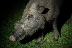 (zwierzory) Tags: animal
