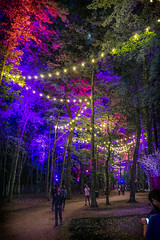 Where In The Woods Path, 2019.06.13 (Aaron Glenn Campbell) Tags: bonnaroo musicfestival coffeecounty manchester tn tennessee whereinthewoods evening night trees canopy foliage leaves atmosphere mood lights outdoors optoutside nikcollection colorefexpro sony a6000 ilce6000 mirrorless sigma 19mmf28exdn primelens wideangle emount