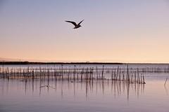 Atardecer en la Albufera de Valencia. (monimunicio) Tags: valencia atardecer agua calma albufera nikon d5300
