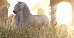 Not as it seems... (drayton.miles) Tags: mesh second sl secondlife kelpie myth legend mythical castle creature horse teegle white pretty roleplay rp danger warning scotland morning sun light sunlight