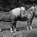 Pferde Neuhaus
