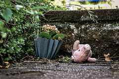 Lost! (pestth) Tags: ip utata:project=ip284 utata:description=hide utata ironphotographer plant piggy