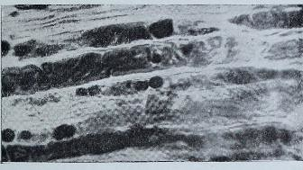This image is taken from The Croonian lectures on the chemical side of nervous activity : delivered before the Royal College of Physicians of London, in June, 1901