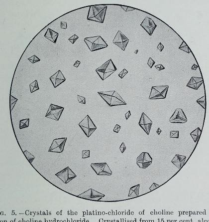 This image is taken from Page 49 of The Croonian lectures on the chemical side of nervous activity : delivered before the Royal College of Physicians of London, in June, 1901