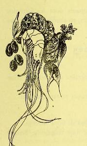 This image is taken from Page 85 of La grande cuisine illustrée : sélection raisonnée de 1500 recettes de cuisine transcendante